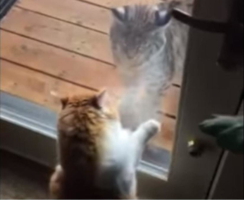 This Kitty Was Sad When An Unusual Cat Stopped Visiting Her