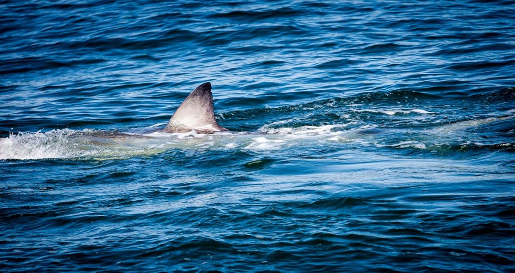 http://158.69.55.95/wp-content/uploads/2018/09/3605414_061518-wtvd-shark-spoted-nc-coast-18-img-1024x544.jpg