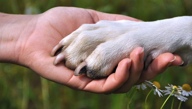 Image result for dogs friendship paws