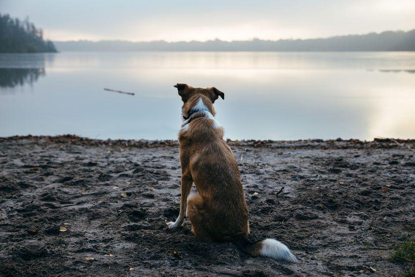 Image result for depressed dog