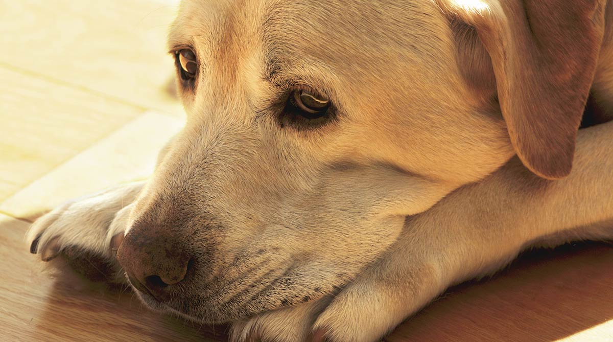 Image result for dog george depressed