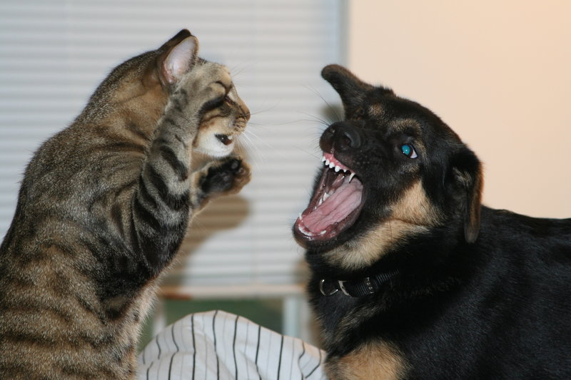 Image result for cats dogs fight