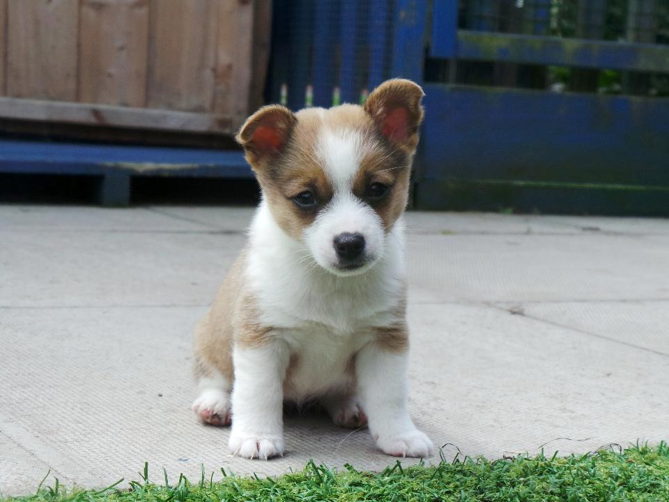 Image result for puppy abandoned