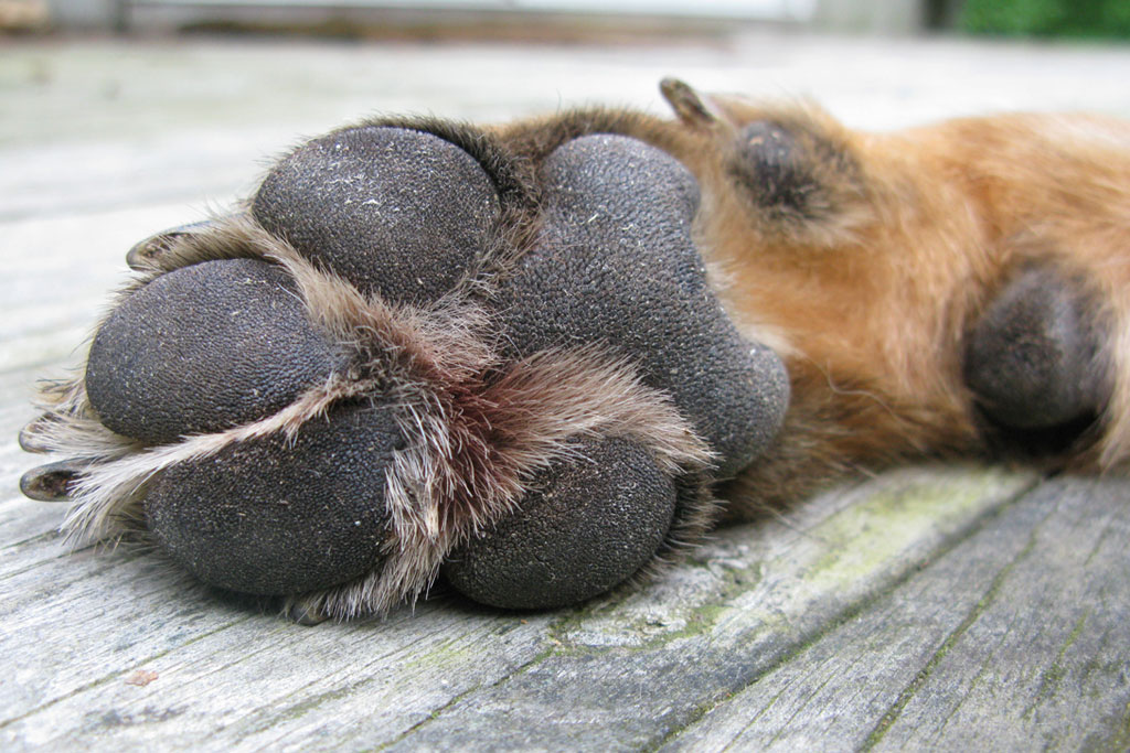 Image result for dog paws